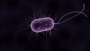 Analisis de Endotoxinas